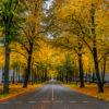 maliebaan herfst